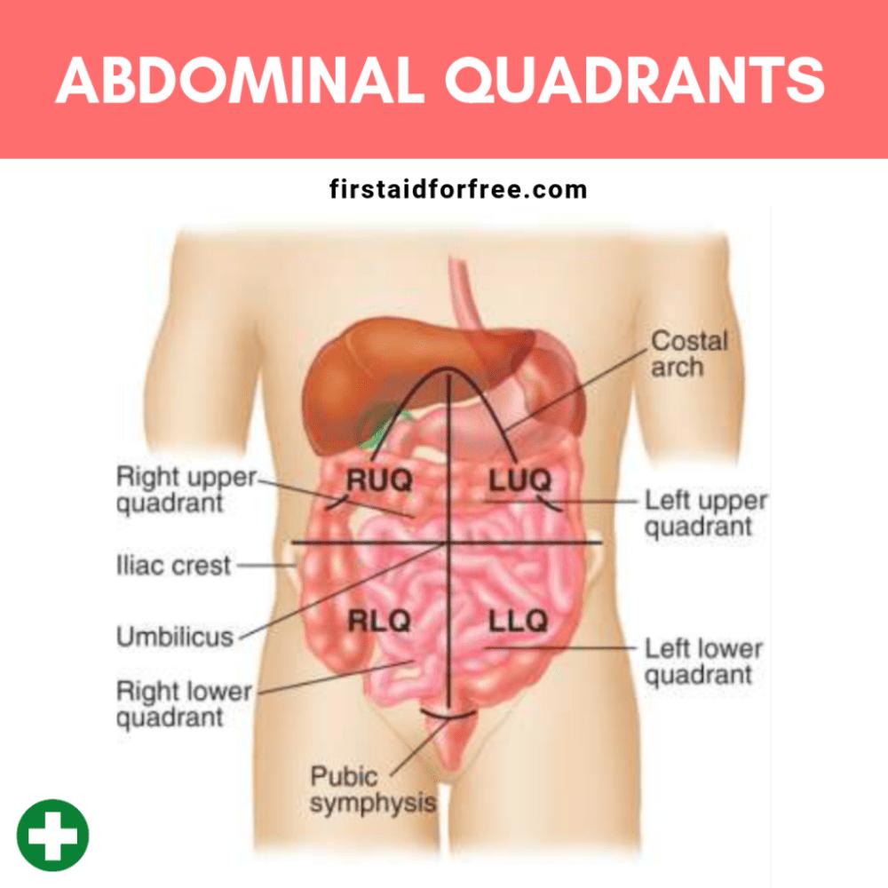 medium resolution of the four abdominal quadrants