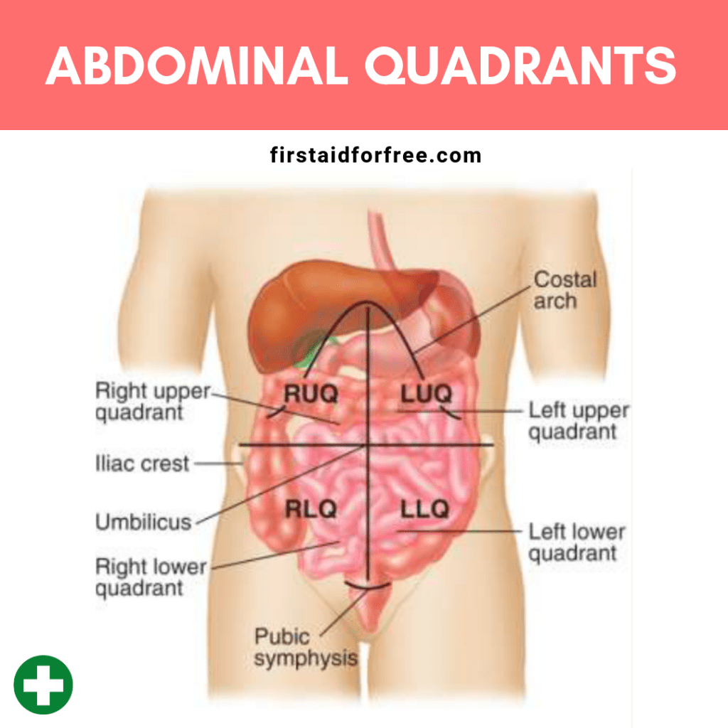 hight resolution of the four abdominal quadrants