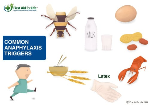 Common triggers of allergic reaction and anaphylaxis