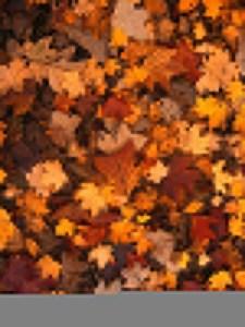 How Your Garage Door is Impacted by Leaves
