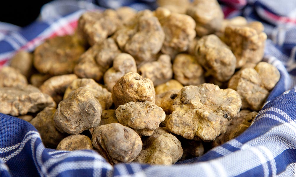 When is white and black truffle season?