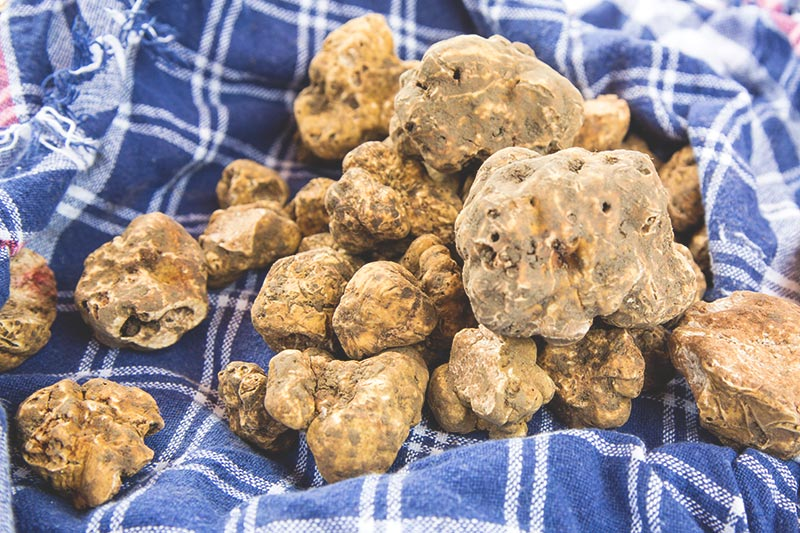White truffles - Most expensive ingredients