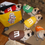 14 Adorable Dogs Dressed Up In Hilarious Halloween Costumes First For Women