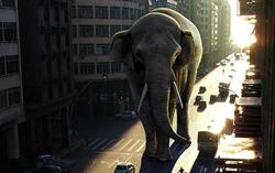 Photoshop Lighting Tutorial – The Elephant