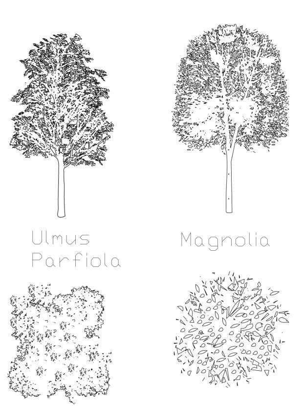 Magnolia and Ulmus
