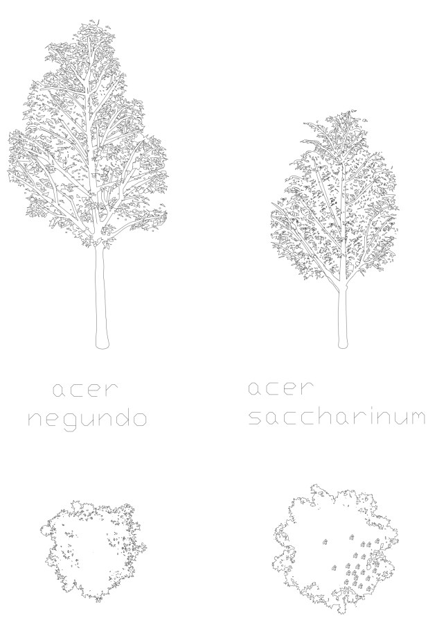 Acer and Acer