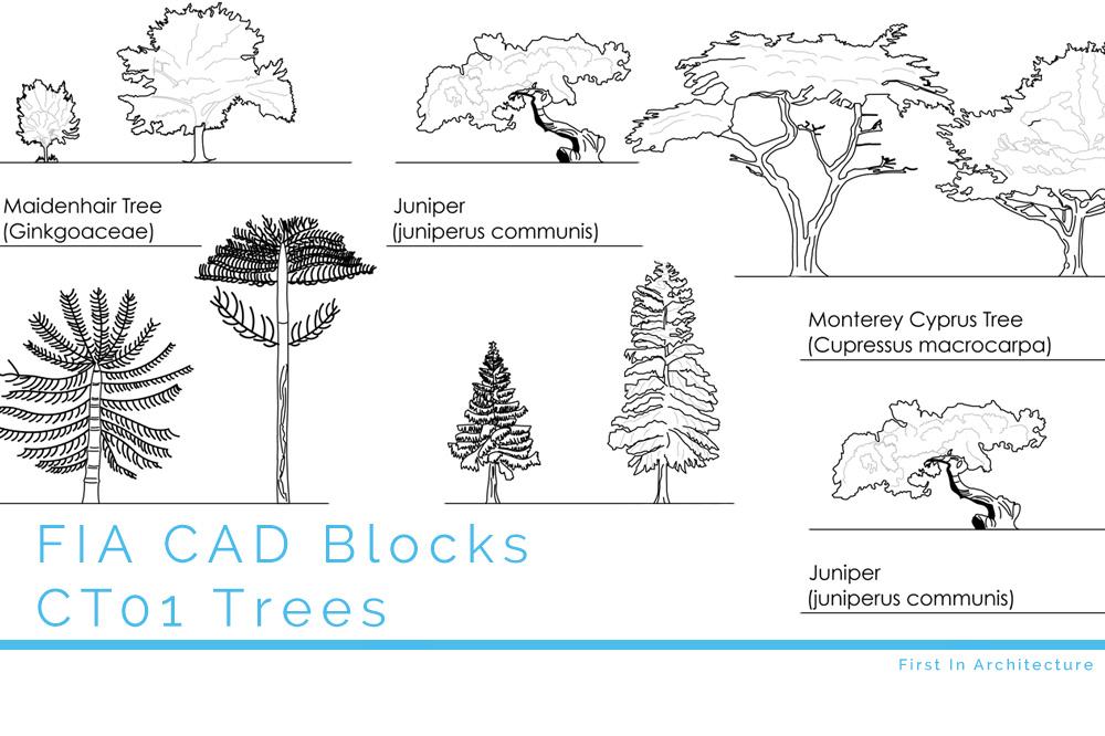 CAD Blocks Trees CT01