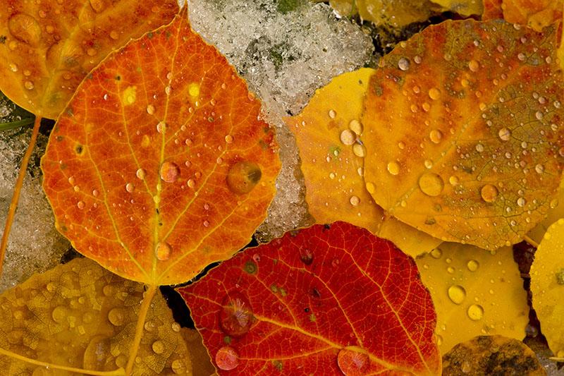 Orange Fall Wallpaper Fall Color Photo Gallery