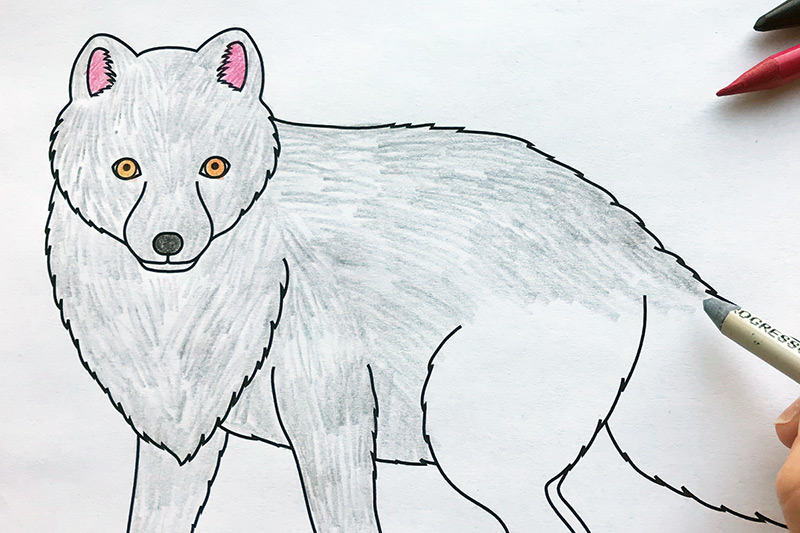 arctic fox  free printable templates & coloring pages
