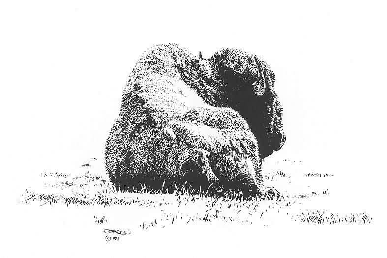 Richard Corben : Bison