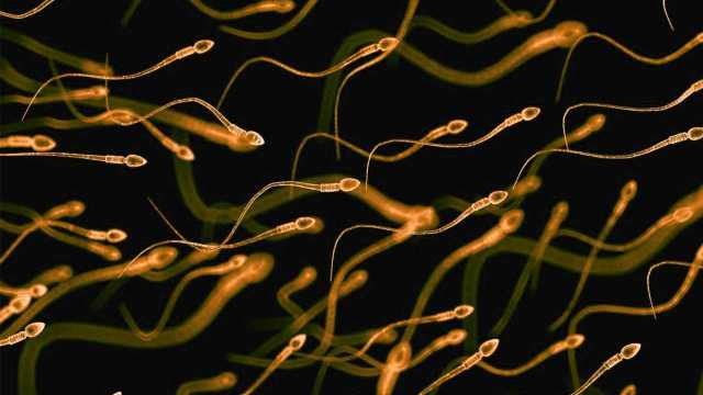 Studies have shown that COVID19 may damage sperm quality and reduce male fertility