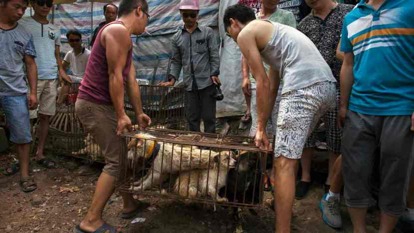Coronavirus now an ally to Chinese activists in their fight to ban dog meat