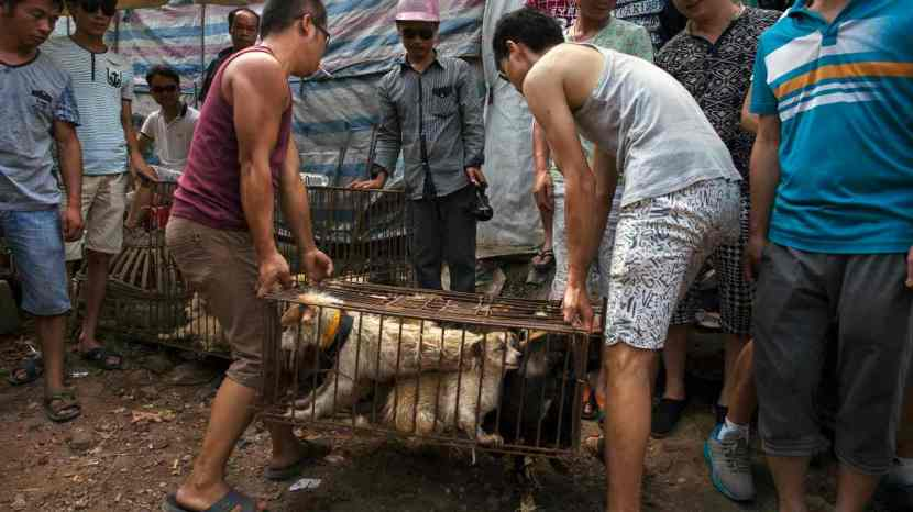 Coronavirus now an ally to Chinese activists in their fight to ban dog meat 1