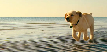 Cute Adorable Wallpapers First Teaser Trailer For Marley And Me So Cute