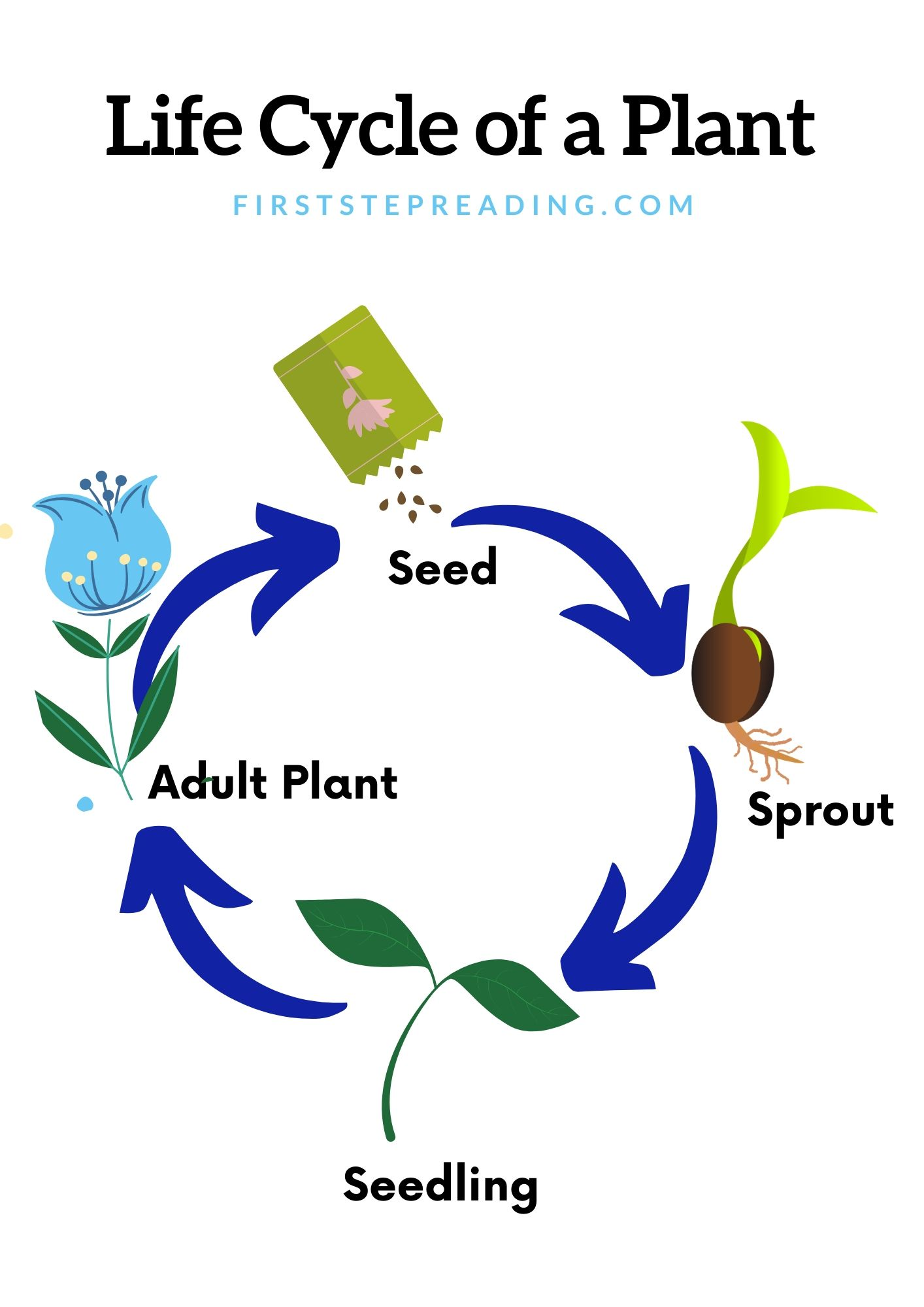Life Cycle Of A Plant Diagram