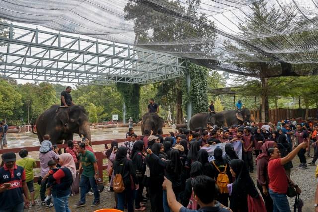 彭亨大象保育中心