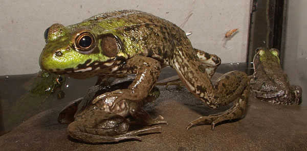 Frog  Toad Photos
