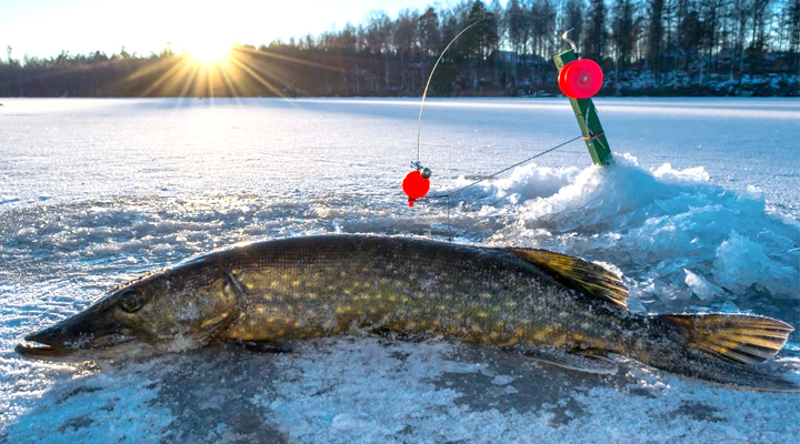 6 Important Ice Fishing Tips and Facts You Must Know