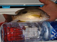 FISHING-TEAM.COM 魚獲紀錄