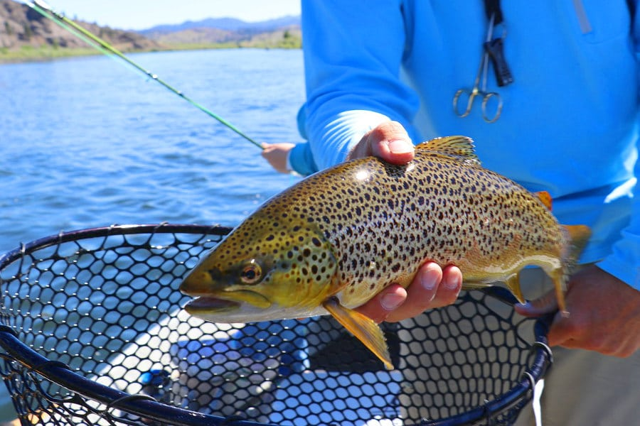 best weight for trout fishing off 71% - medpharmres.com