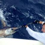 Bn'M II swordfish