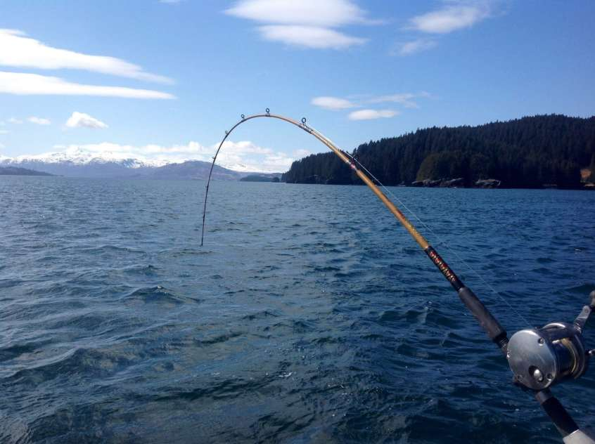 Kodiak Island Charters at its best! Bent rods and tight lines on Fish N' Chips Charters