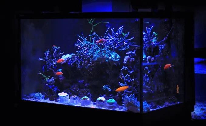what size fish tank