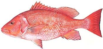 red-snapper_fisheyesportfishing