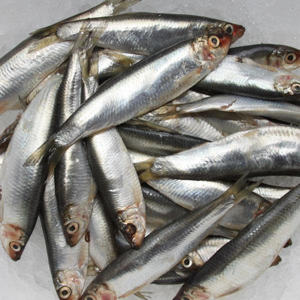 Fresh Whole Sprats - Fish Shack