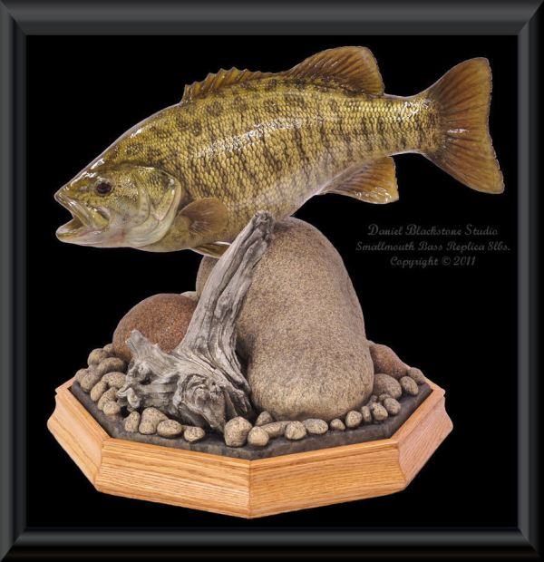 Smallmouth Bass Replica Mounts - Year of Clean Water