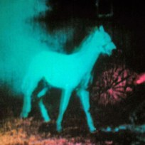 3.12 Malcolm Le Grice, Berlin Horse.