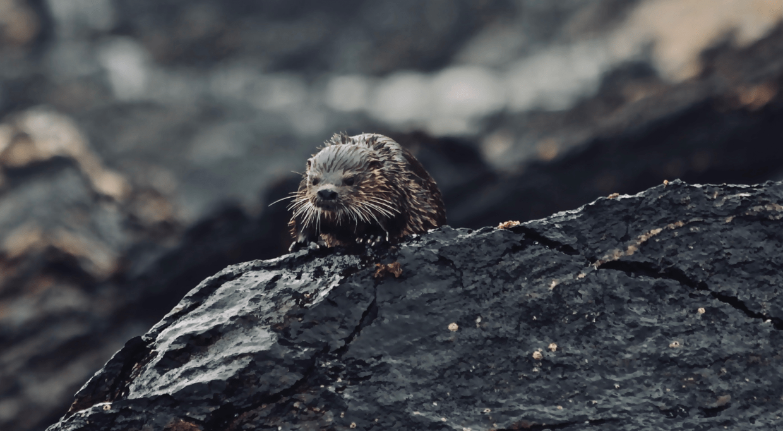 wildlife-0025
