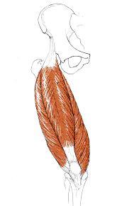 Fig. 2.2 - retto del femore
