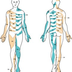 L4 Nerve Pain Diagram Bryant Forced Air Furnace Conflicting Dermatome Maps Educational And Clinical