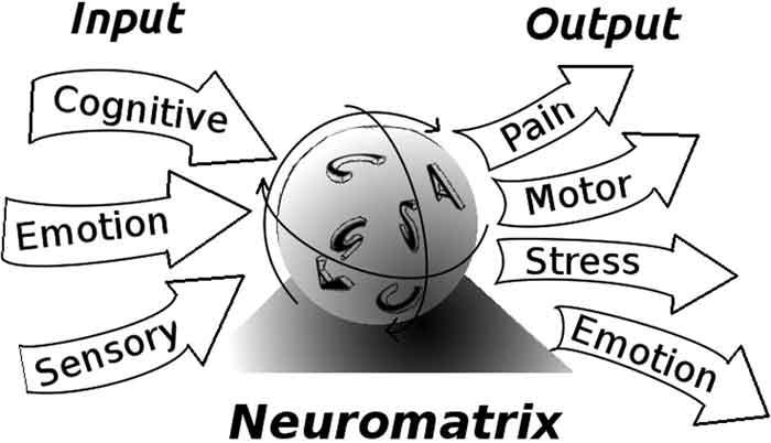 Il ruolo del sistema nervoso centrale nella tendinopatia della cuffia dei rotatori