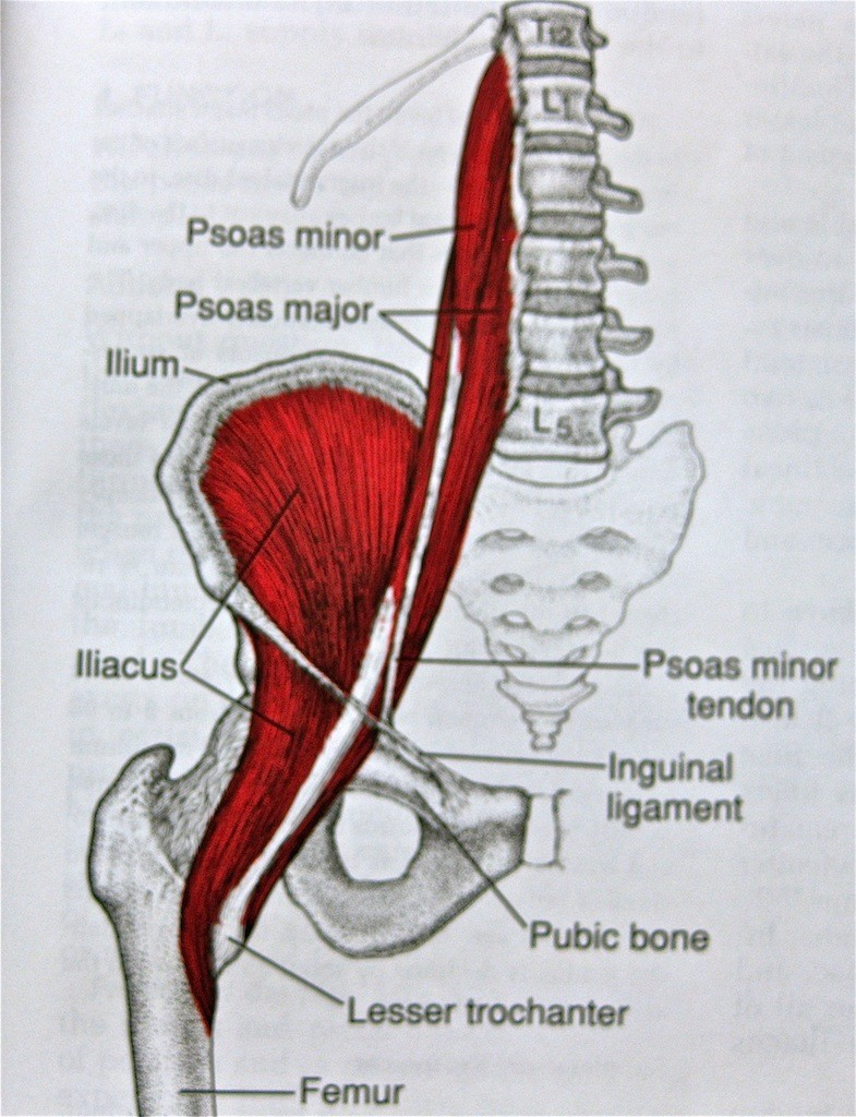 Side Hip Muscle Diagram