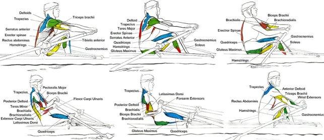 fisioterapia canottaggio