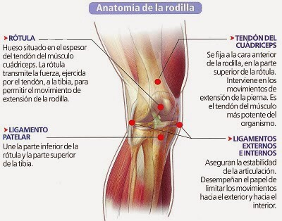 Fisioterapia de la Serna. fortalecimiento del cuadriceps tras una ...