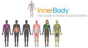innerbody