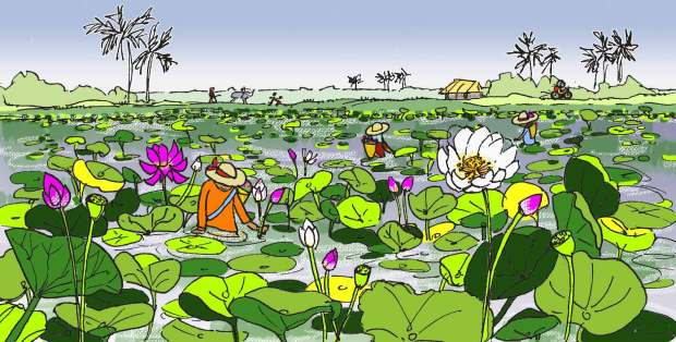 Wandering Angkor Siem Reap Countryside Lotus Pond Fissos World
