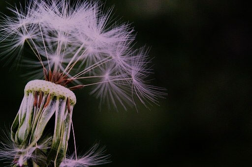 Fit and Healthy Mums / Why the Dandilion