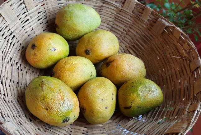 Mankurad Mangoes - for mango juice