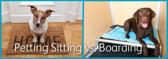 Making the right choice between a pet sitter vs. dog facility %%page%%  %%sep%% %%sitename%%