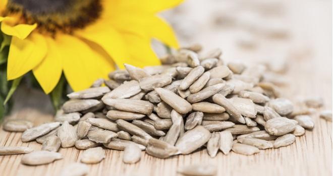 Sonnenblumenkerne knabbern bringt Kraft und Vitalitt