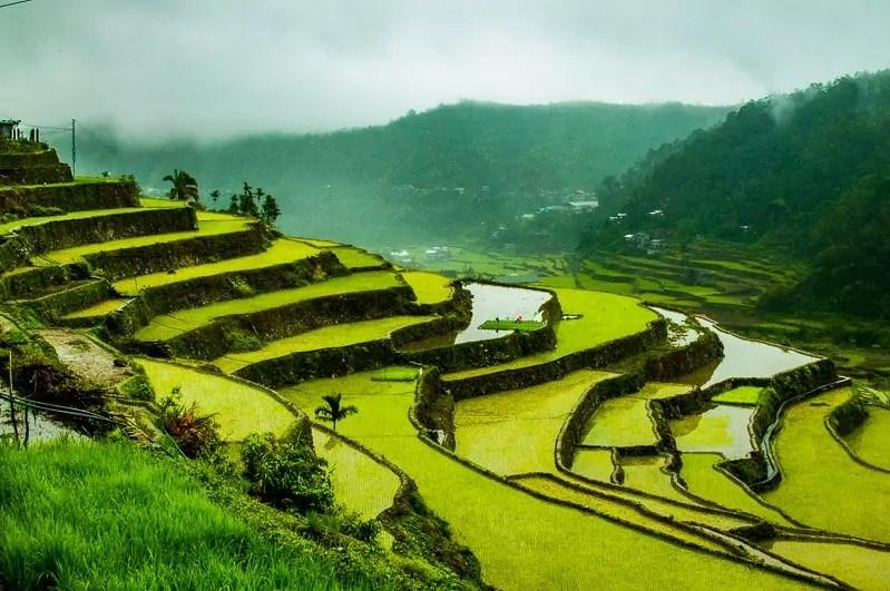 banaue rice terraces hapao