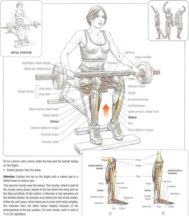 Seated barbell calf raises  Abdominal Muscles  Fitness VIP