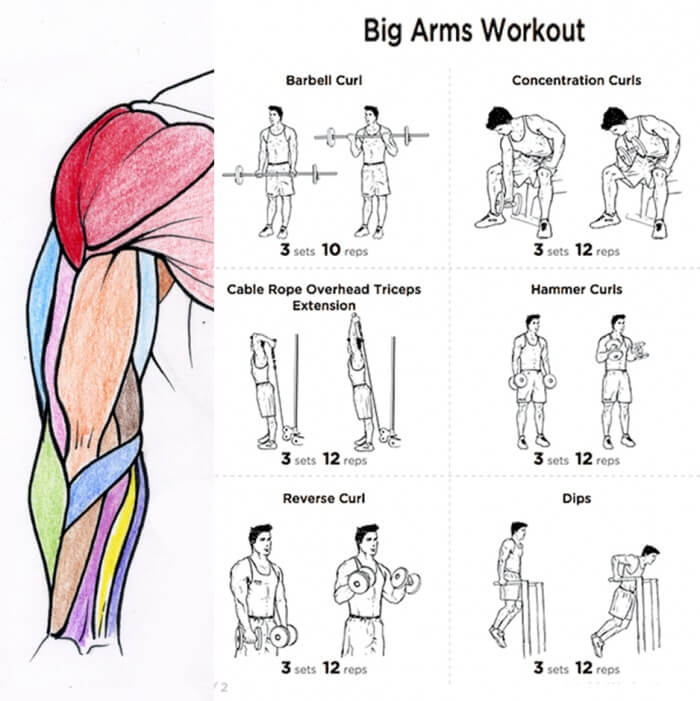 Biceps And Triceps Workout Program For Beginners Viewyoga Co