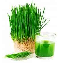 Photo of How Wheat-grass Can Help You Stay Fit and Beautiful