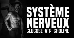 Un système nerveux au top pour un corps en pleine forme