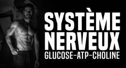 🔓Le système nerveux, son carburant et sa bonne connexion – Formation